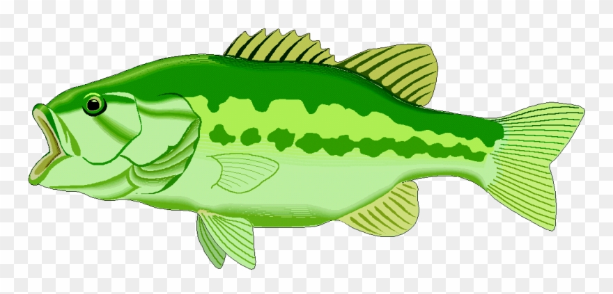 Explore pictures bass png. Lake clipart fish clipart