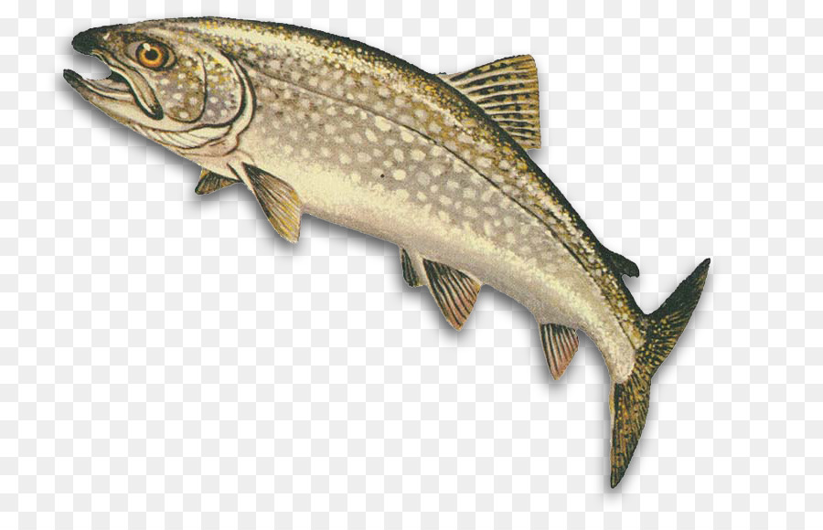 Trout clipart oily fish. Fishing cartoon lake transparent