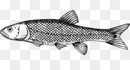 Fish silhouette drawing clip. Bass clipart milkfish