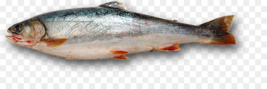 Tropical fish salmon clip. Bass clipart milkfish