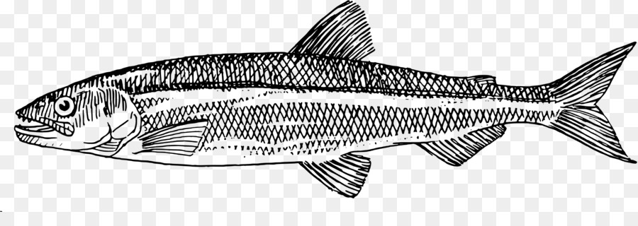 Bass clipart milkfish. Computer icons download clip