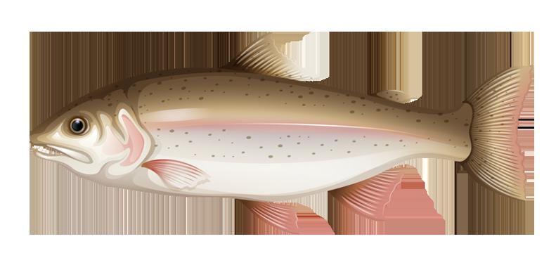 Bass clipart milkfish. Drawing royalty free clip