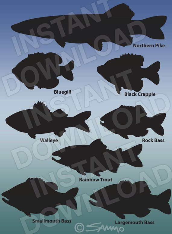 Assorted fish silhouettes pike. Bass clipart rainbow trout