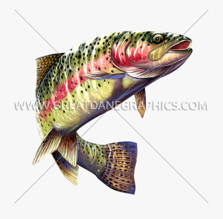 Drawing clear background . Bass clipart rainbow trout