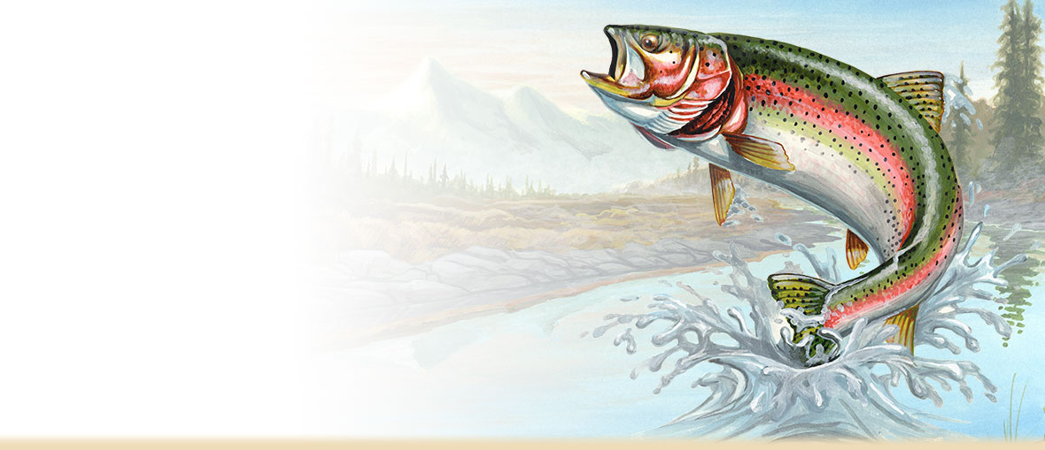 Information facts photos and. Bass clipart rainbow trout