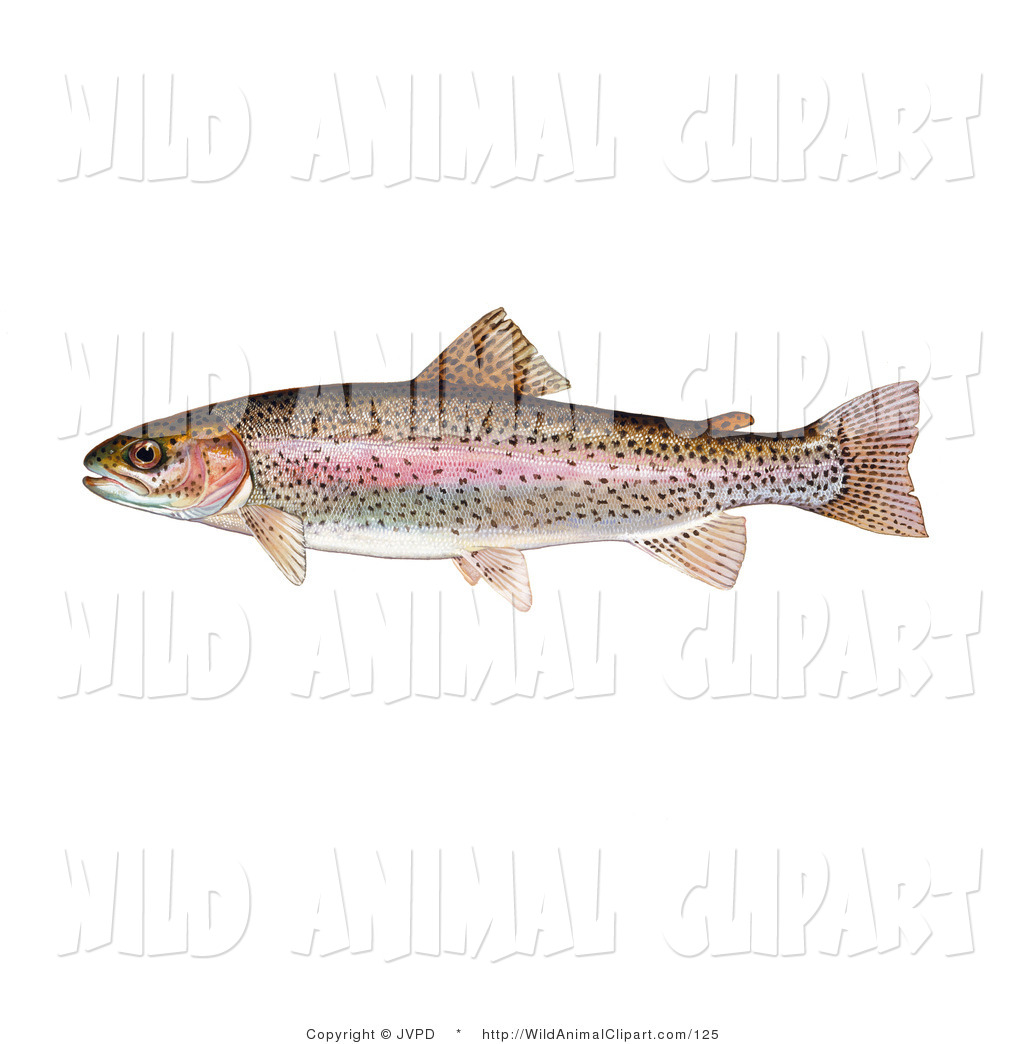 Clip art of a. Bass clipart rainbow trout