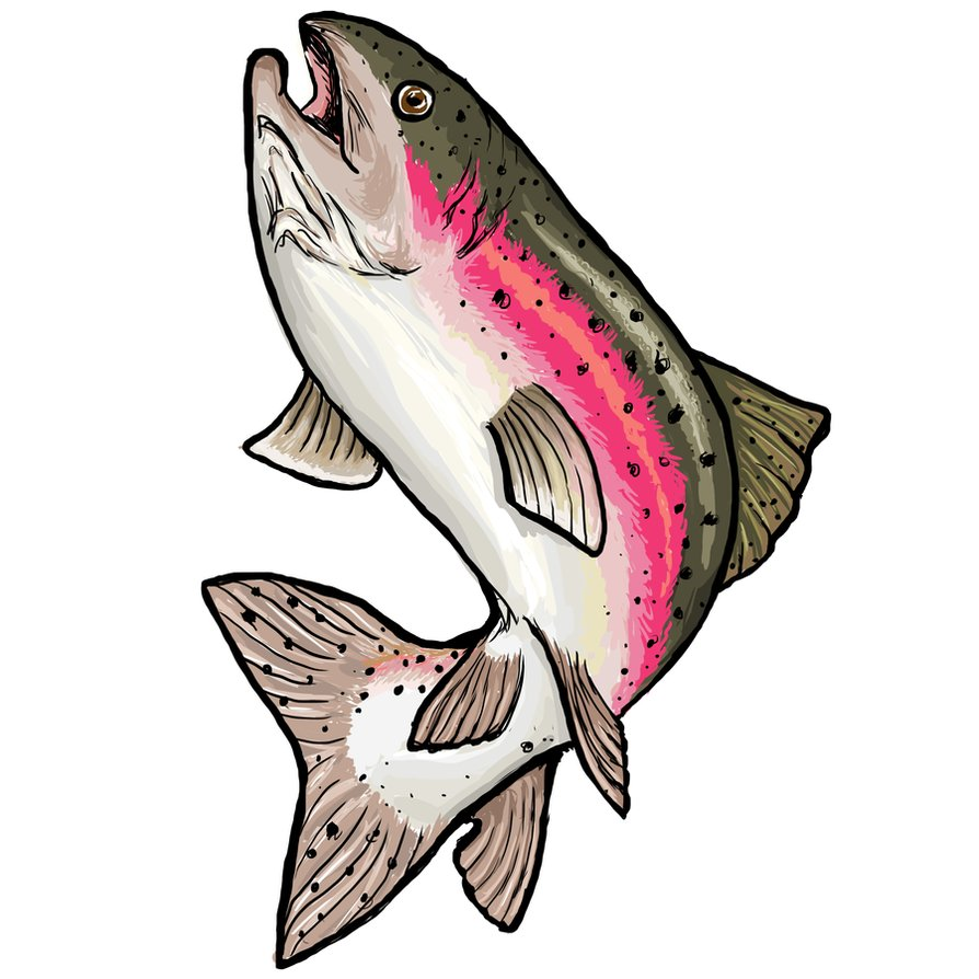 Bass clipart rainbow trout. By clairestclara on deviantart