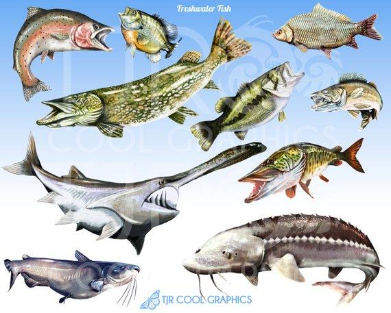 Bass river fish