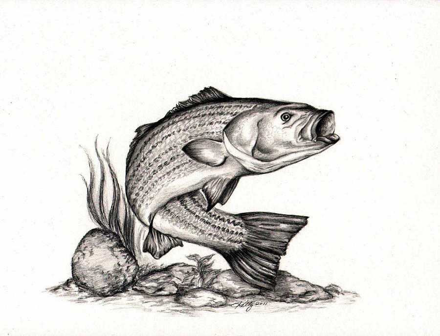 Free fish line drawings. Bass clipart sketches