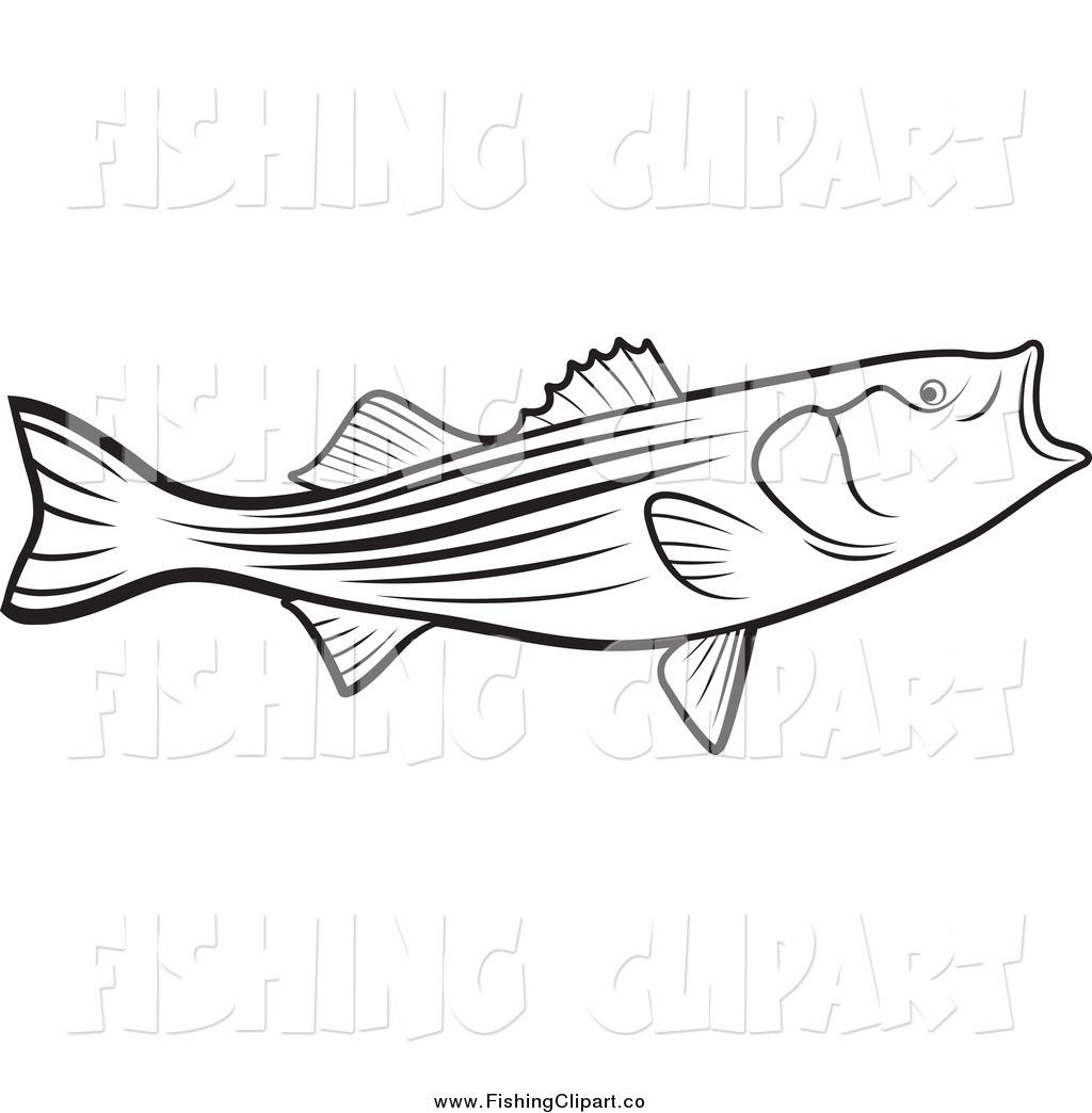 Fishing drawing at getdrawings. Bass clipart sketches