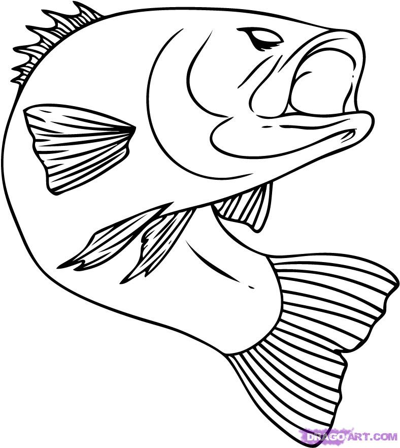Bass clipart sketches. Free fish line drawings