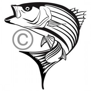 Bass clipart striped bass. One color custom vector