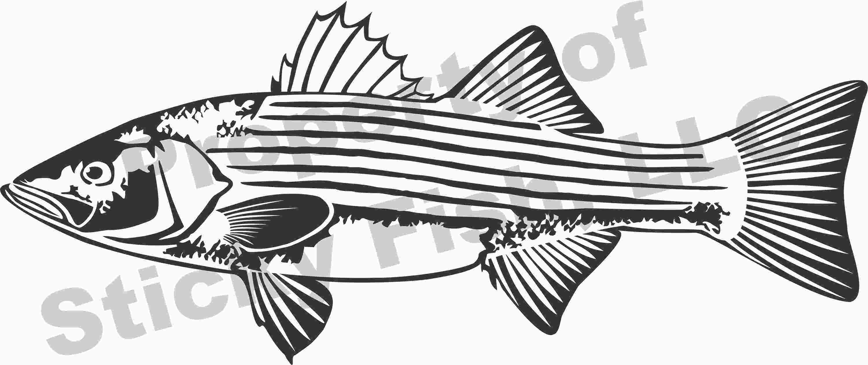 Our decal has great. Bass clipart striped bass