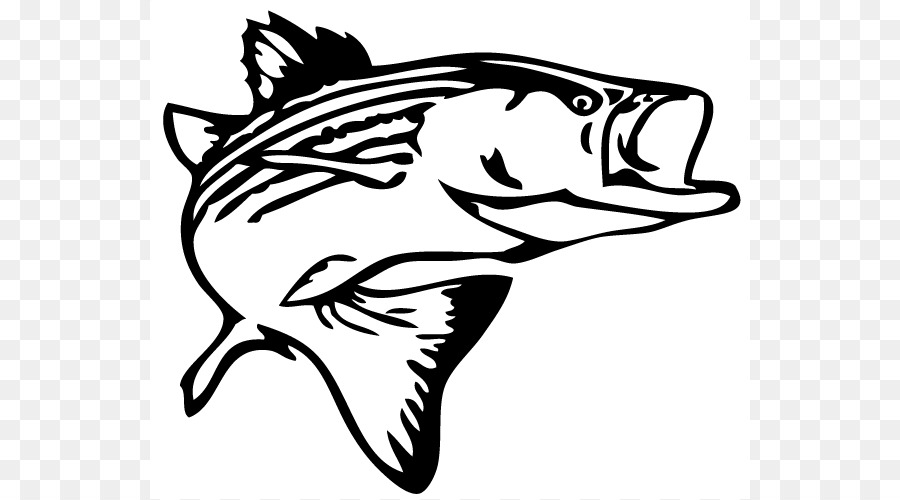 Bass Clipart Striped Bass Bass Striped Bass Transparent