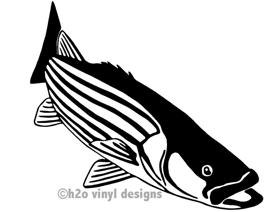 Fishing clipart striped bass. Striper vinyl sticker