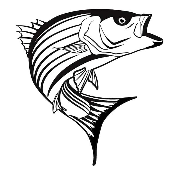Free cliparts download clip. Fishing clipart striped bass