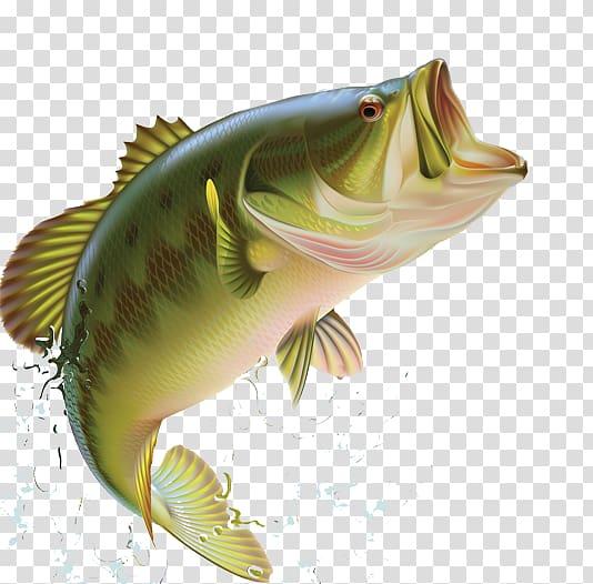 Bass clipart transparent. Largemouth fishing sunfishes blues