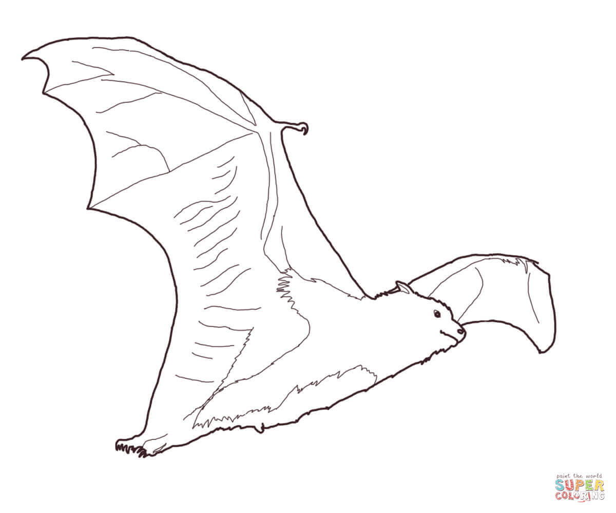 Fruit coloring page free. Bat clipart flying fox