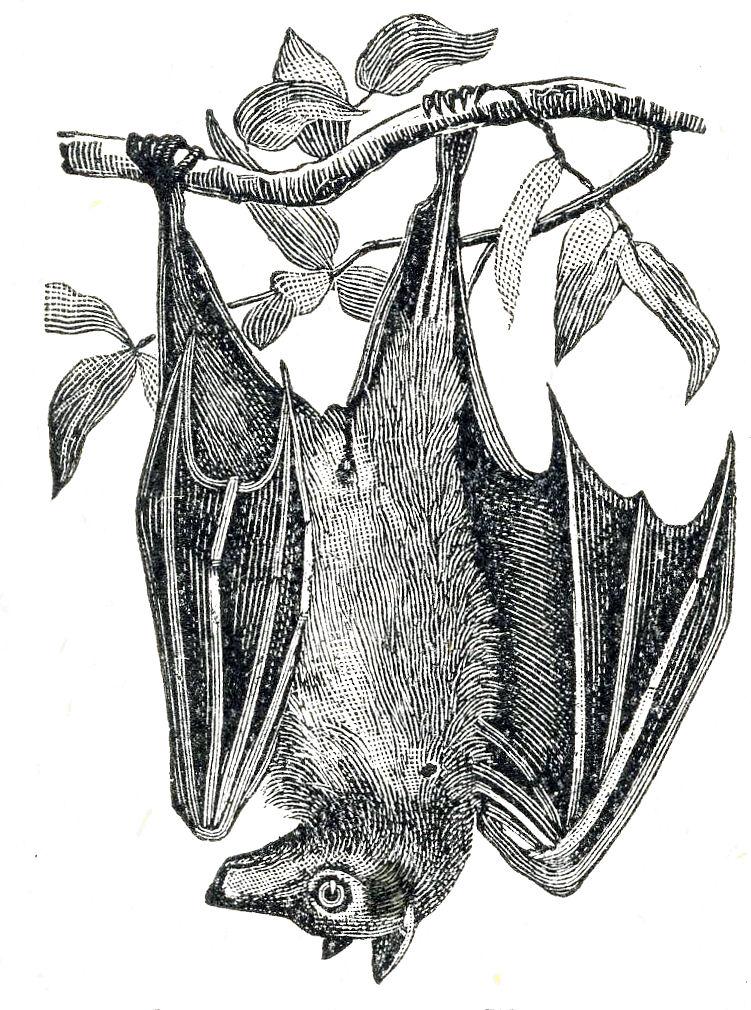 Halloween clip art creepy. Bat clipart vintage