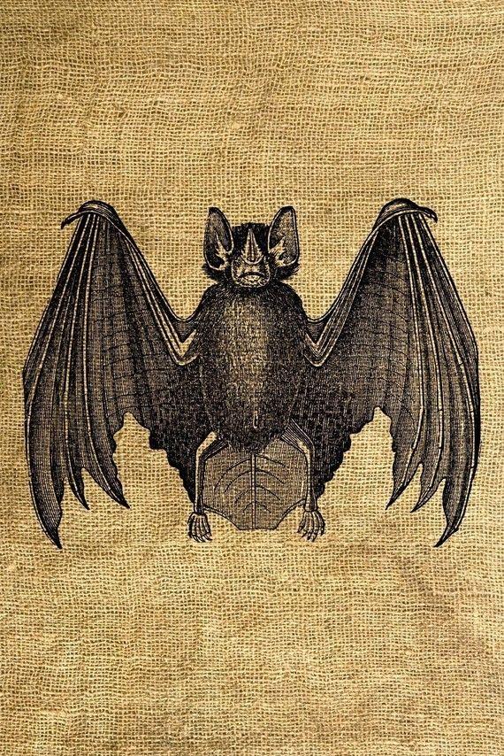 best images on. Bat clipart vintage