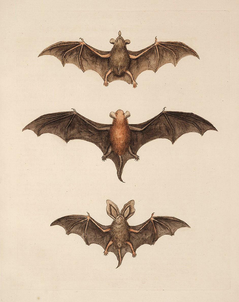 Free halloween clip art. Bat clipart vintage