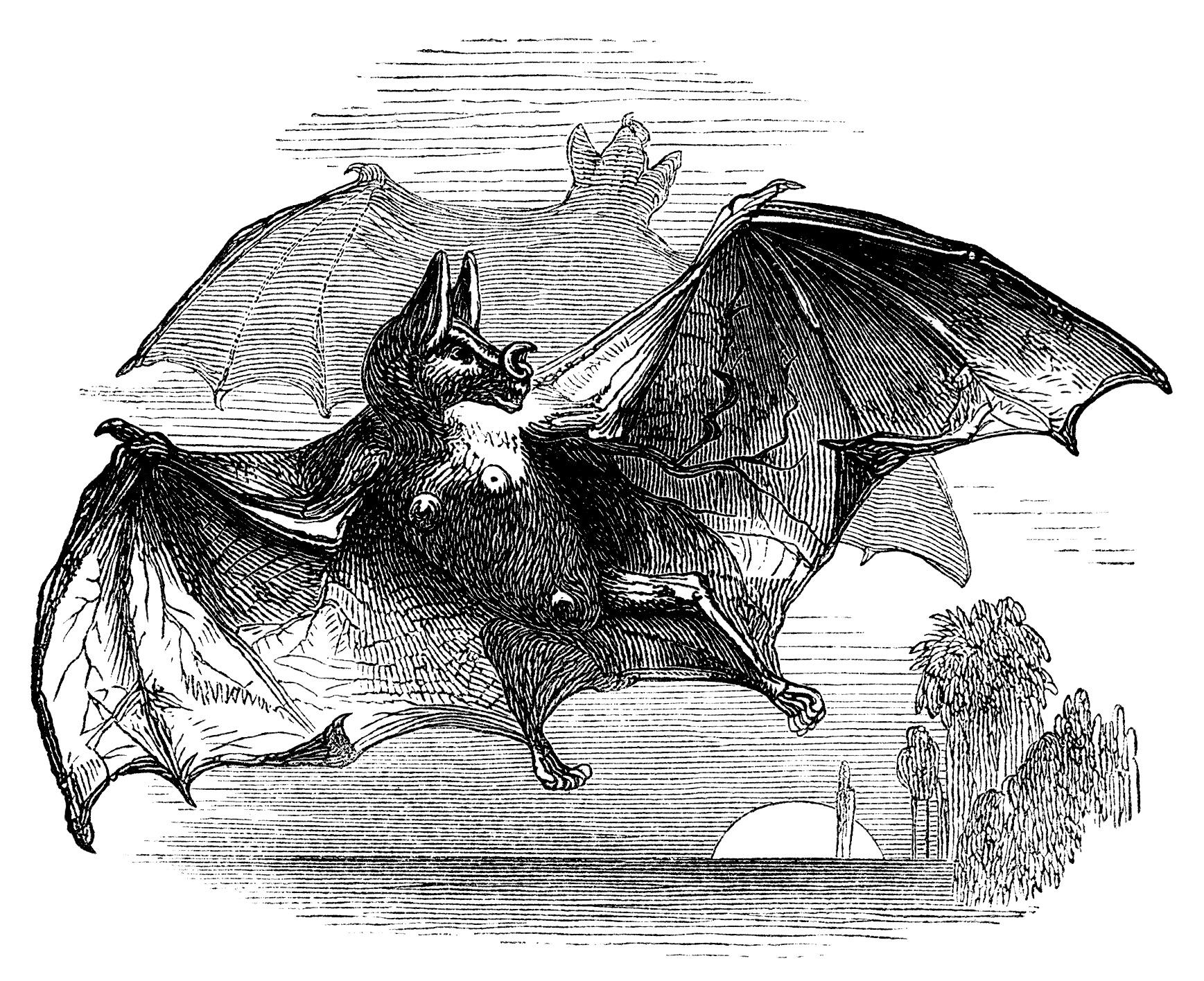 Bat clipart vintage. Vampire free clip art