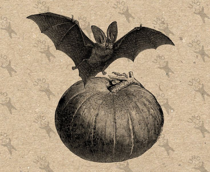Bat clipart vintage.  best holidays images
