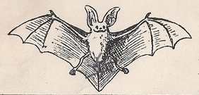 Bat clipart vintage. Leaping frog designs friday