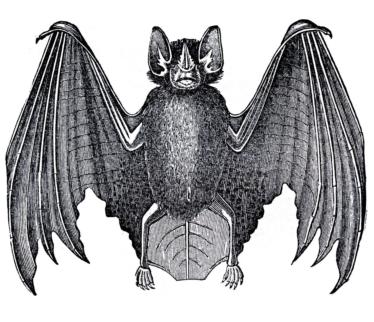 Download image antique halloween. Bat clipart vintage