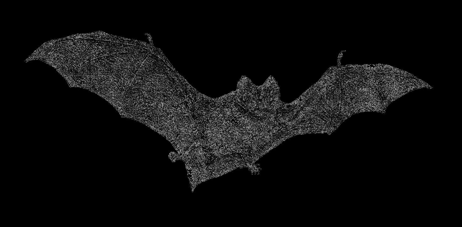 Bat clipart vintage. Antique images free halloween