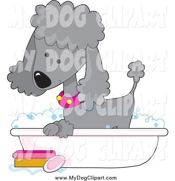 Bath clipart poodle. Clip art of a