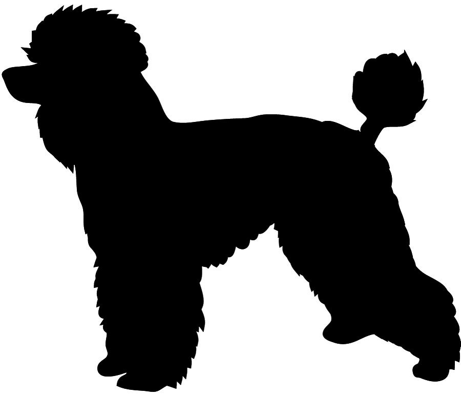 Beautiful clipart poodle. With leash silhouette kid