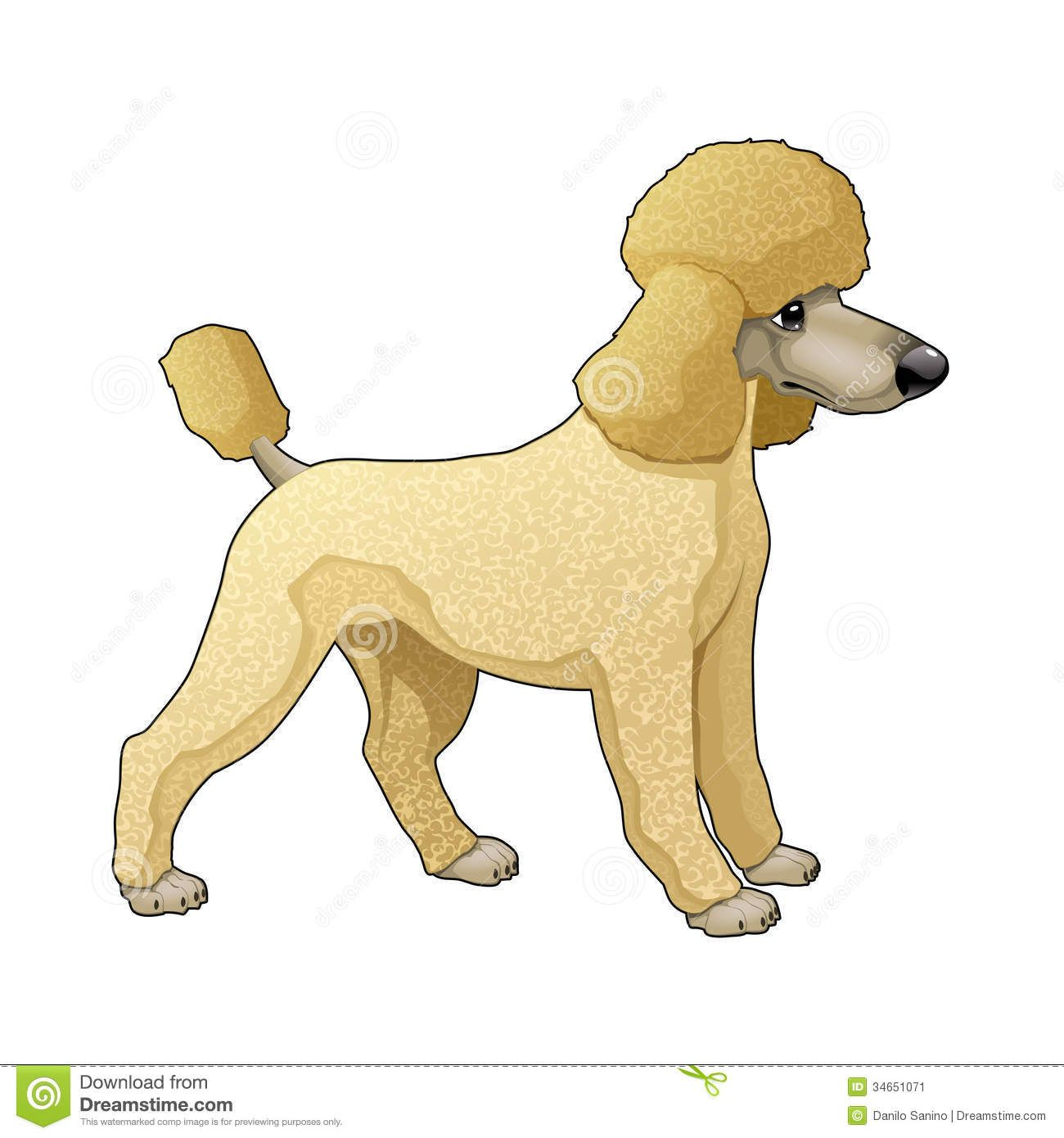 Stock image animal cards. Bath clipart poodle