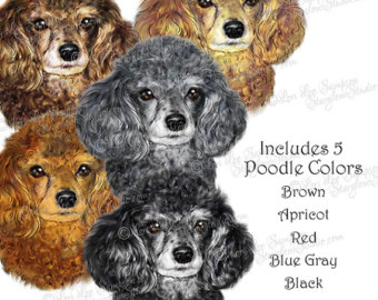 Bath clipart poodle. Etsy dog in colors