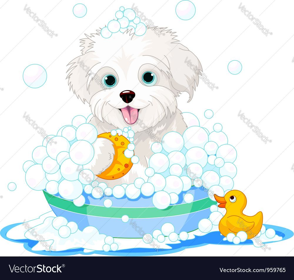 White fluffy dog having. Bath clipart puppy