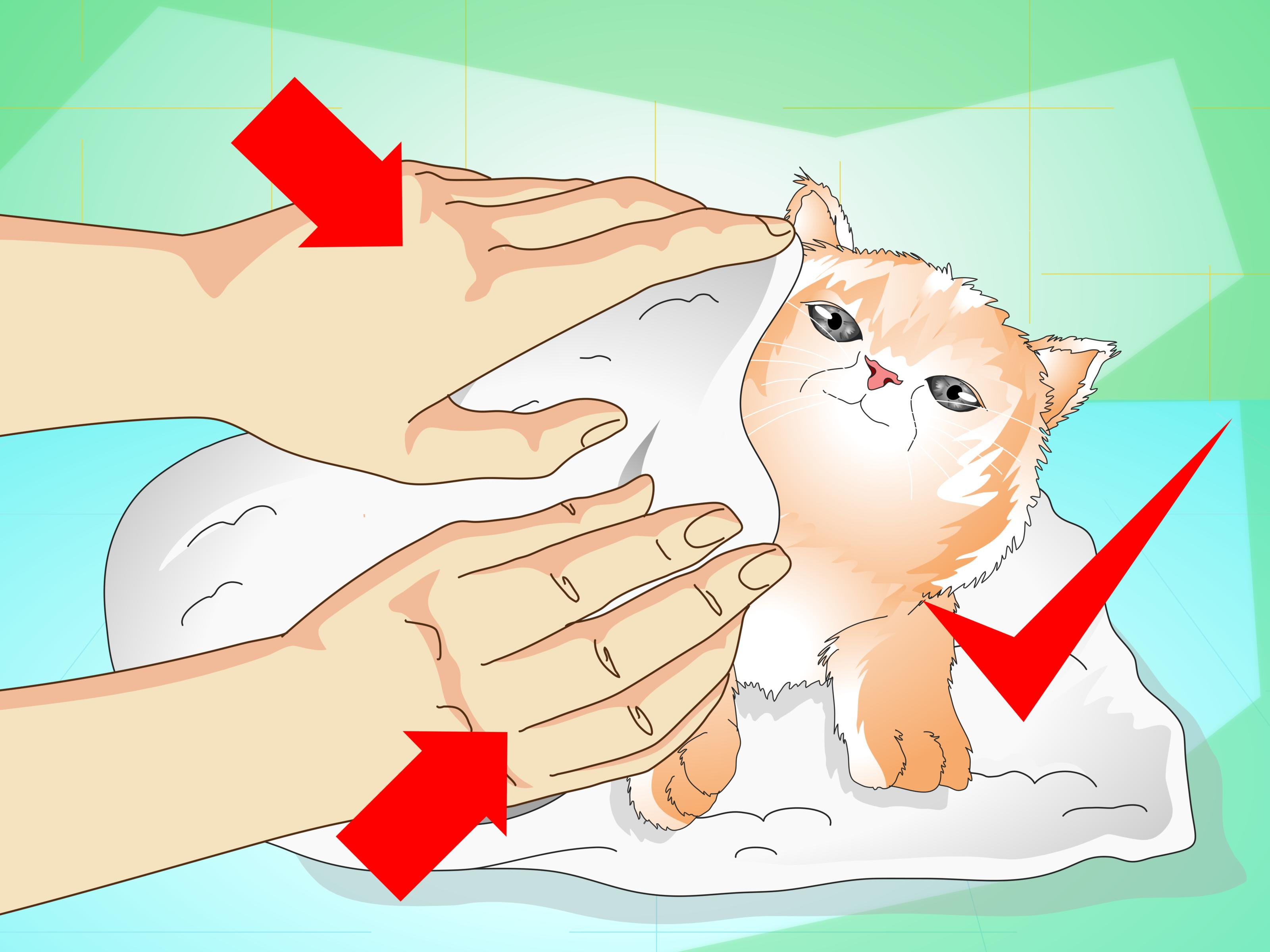 How to give a. Bathtub clipart warm bath