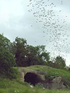 best beauty of. Bats clipart bat cave