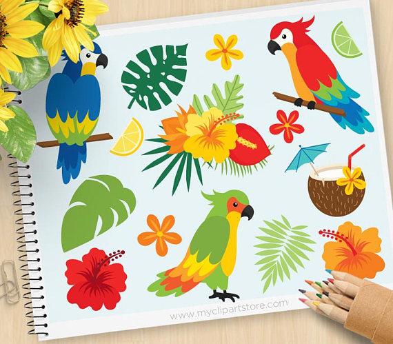 Beach clipart bird. Parrots tropical birds palm