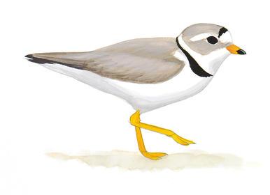 How i learned to. Beach clipart bird