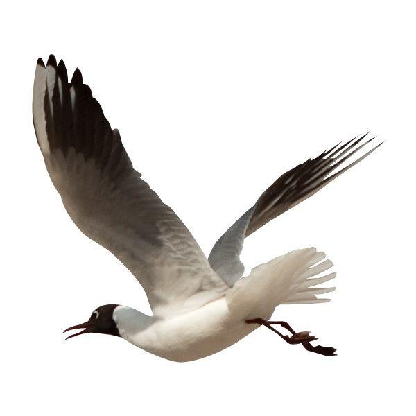 Calidesign navigate elements png. Beach clipart bird