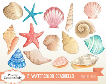 Beach clipart seashell. Etsy buy get free