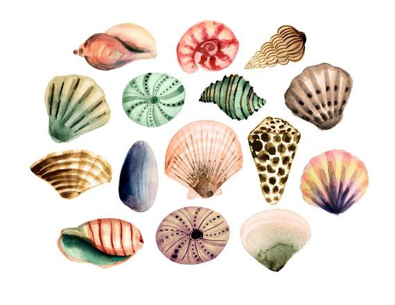 Beach clipart seashell. Sea clipartsummer
