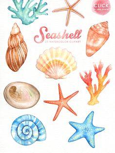 Seashells watercolor nautical clip. Beach clipart seashell