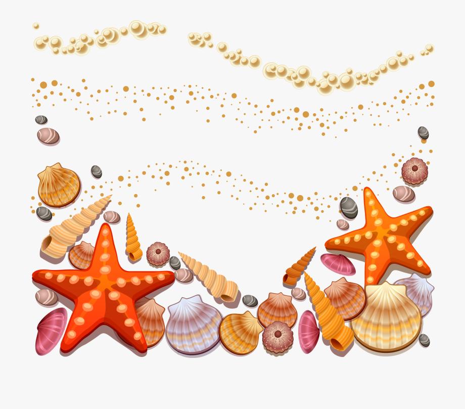 Shell clipart under sea. Shells on the beach