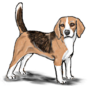Standing animals dogs b. Beagle clipart