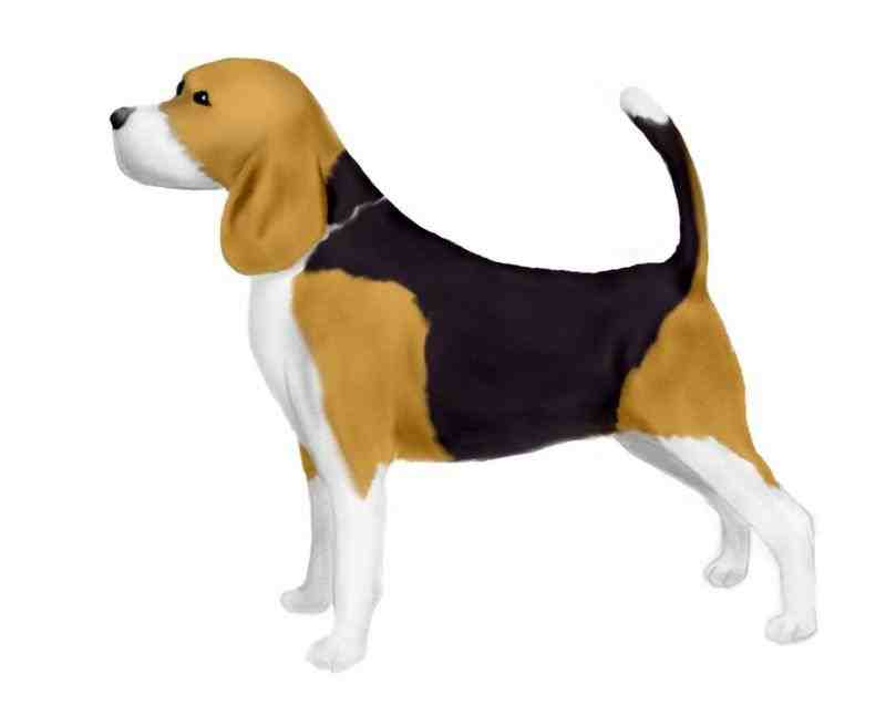Beagle clipart. Silhouette clip art animalsee