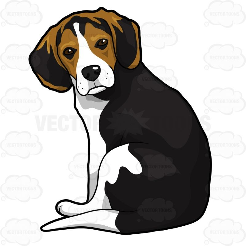 Sitting and looking back. Beagle clipart adorable puppy