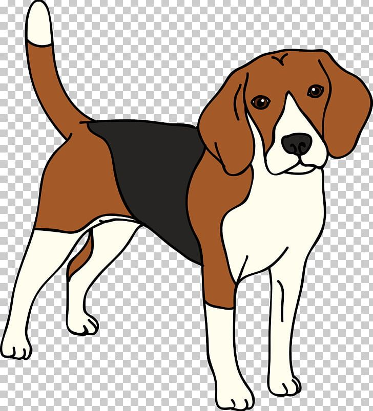 Beagle clipart american foxhound. English harrier finnish