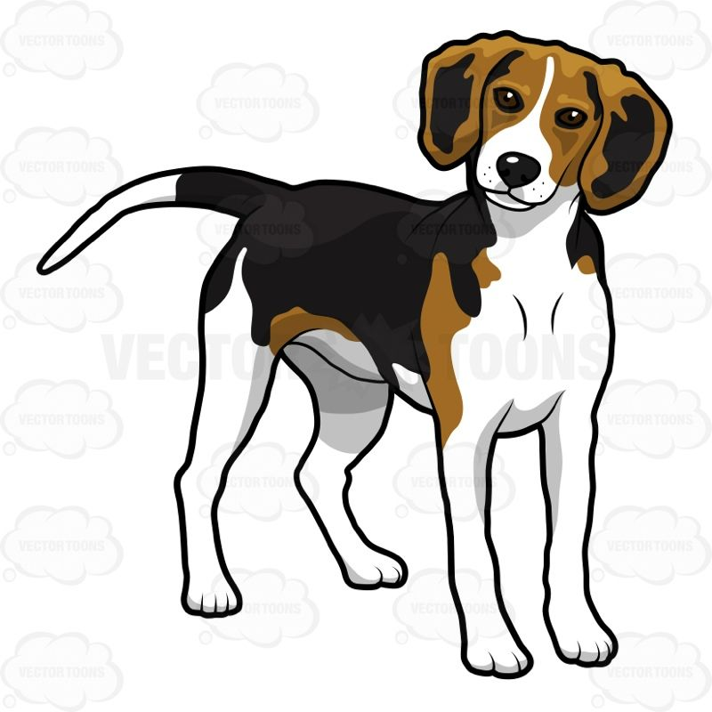 Beagle clipart animated. Standing on all fours