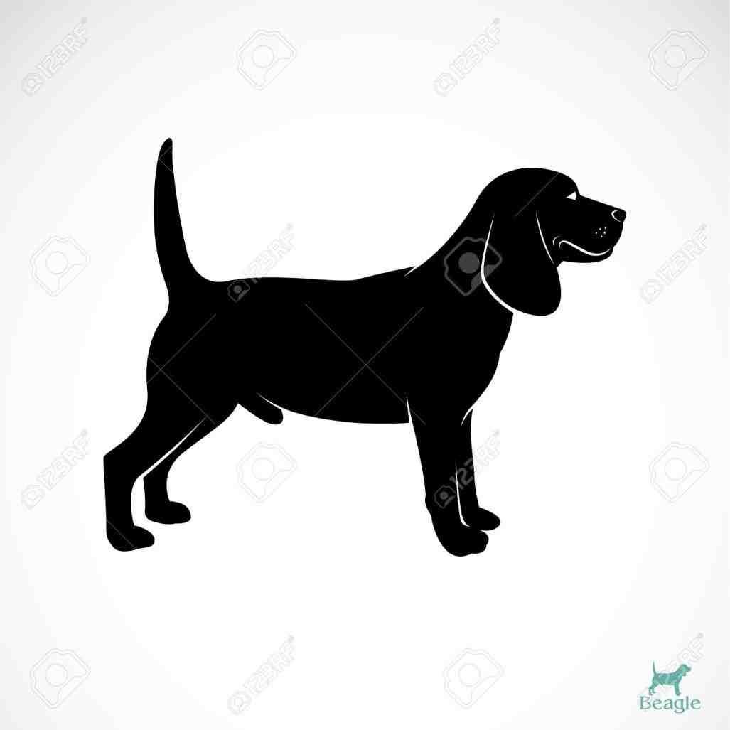 Beagle clipart beagle hunting. Black and white animalsee